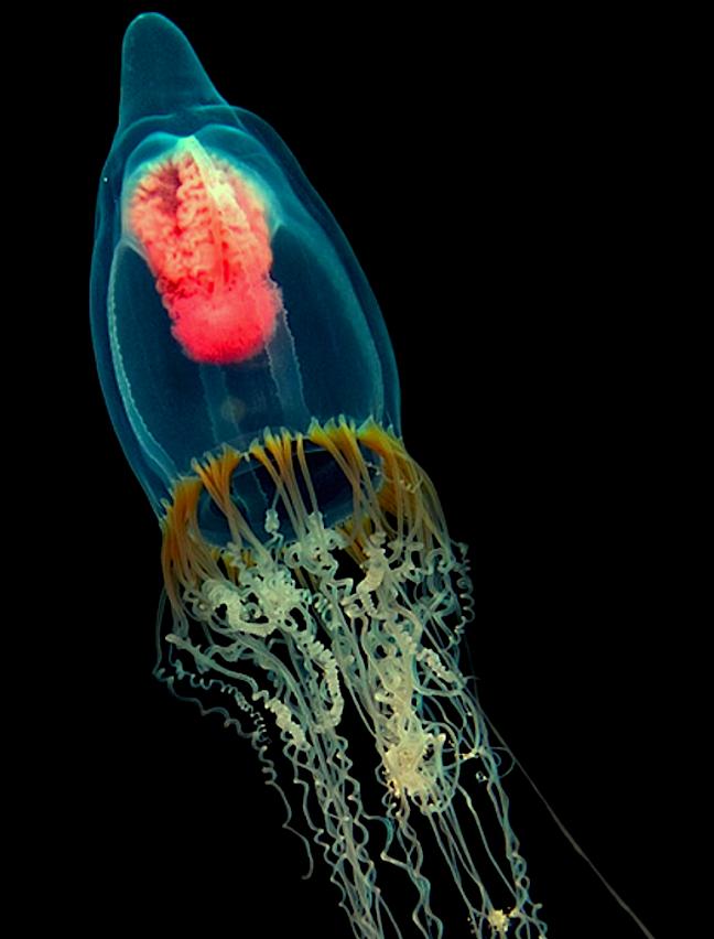 Jellyfish by Nicholas Samaras