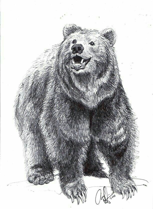 Pencil Drawing | Bear drawing, Bear sketch, Grizzly bear ...