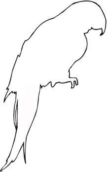 a parrot outline