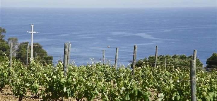 An Italian White Wine Made By Prisoners on the Island of