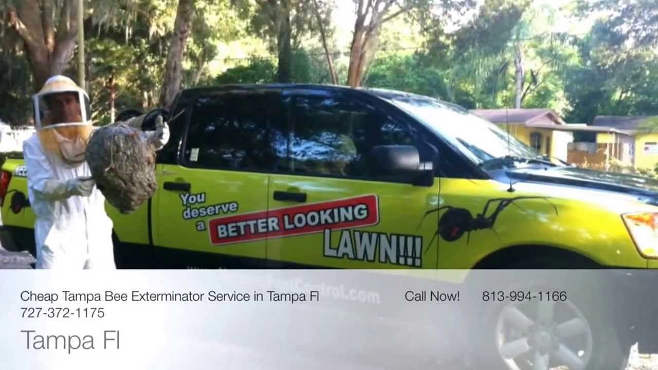 Bee Removal Service Tampa Fl