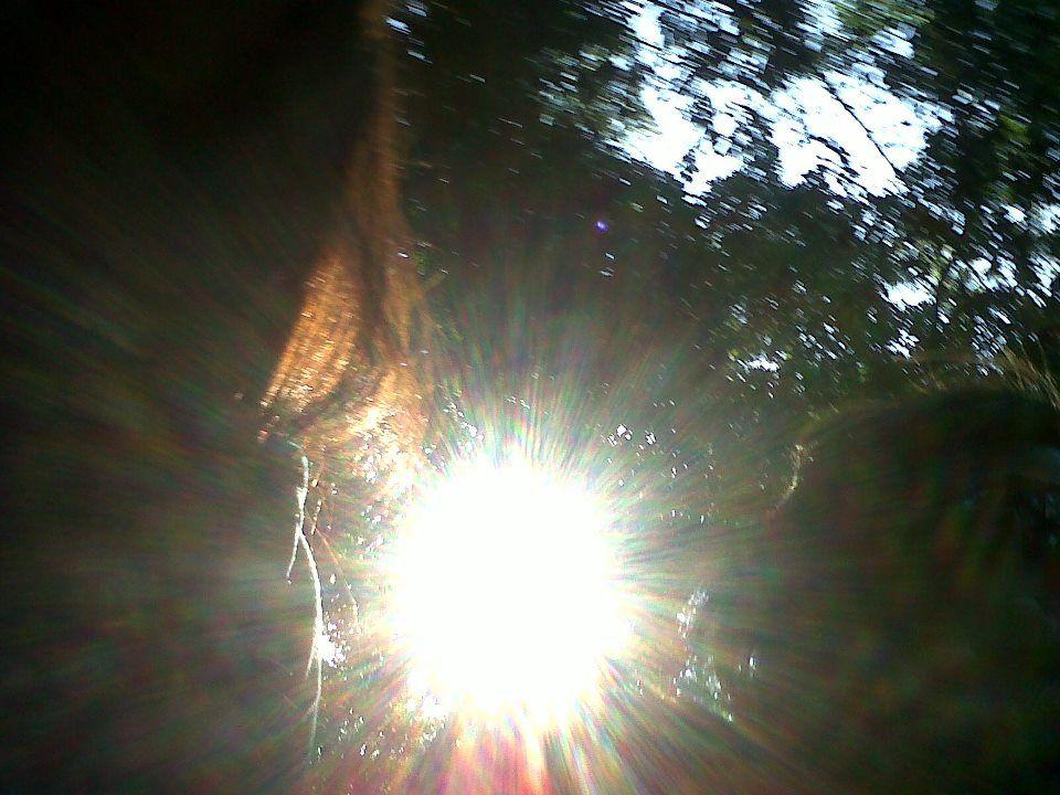 bosque santa marta
