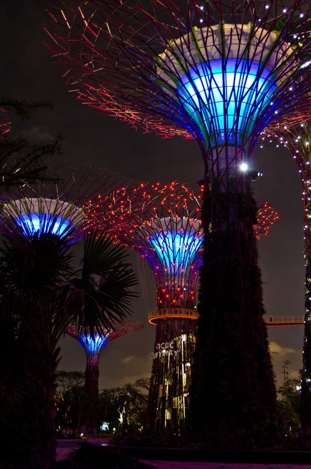 Supertree Grove night time sound & light show, Singapore. These metal-framed structures are mechanical solar-powered trees made into vertical gardens, 18 in total, ranging in height from 82 to 164 feet tall. Photography by Pete Hottelet