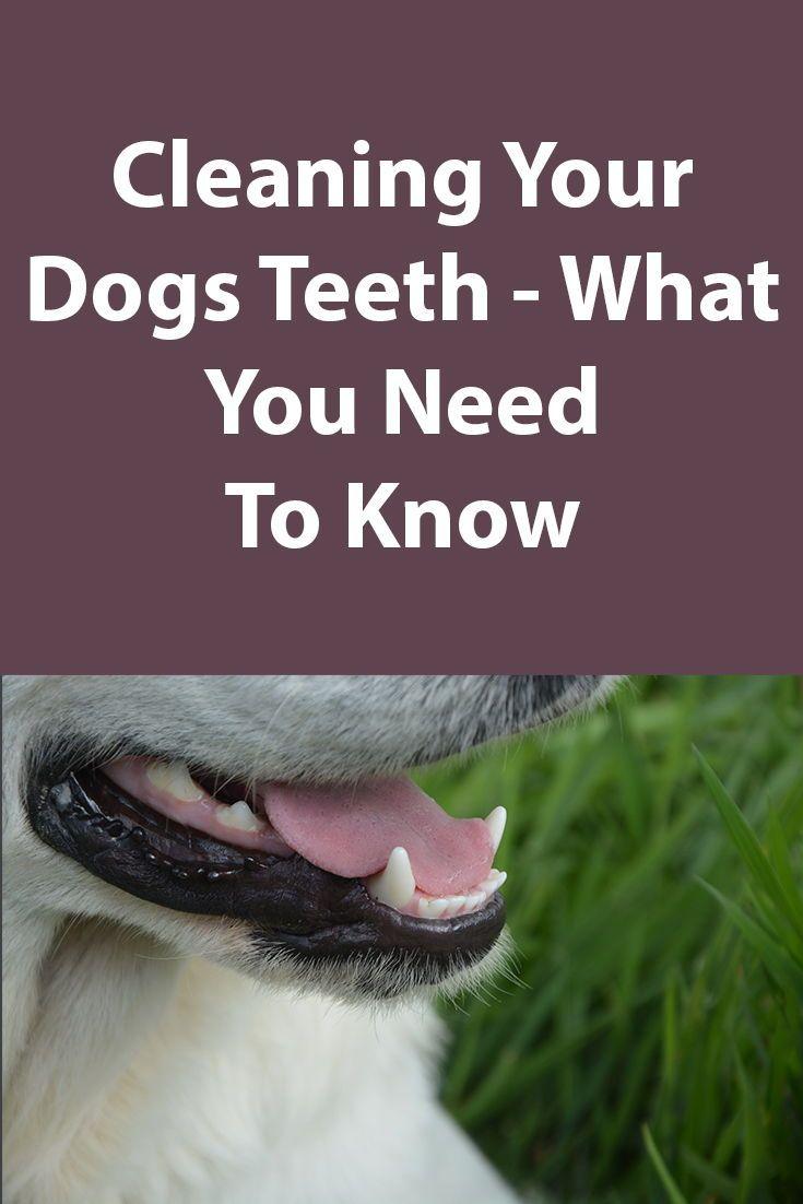 How to clean your dogs teeth dog teeth dog teeth