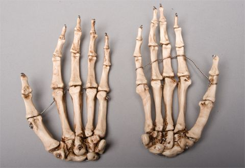 Halloween horror aged skeleton hands life size human skeleton left halloween horror aged skeleton hands life size human skeleton left ccuart Choice Image