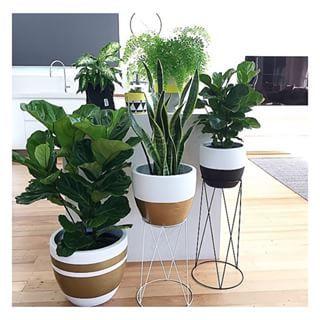 Plant Styling Interior Google Search Plants Indoor Plants Artificial Plants Indoor