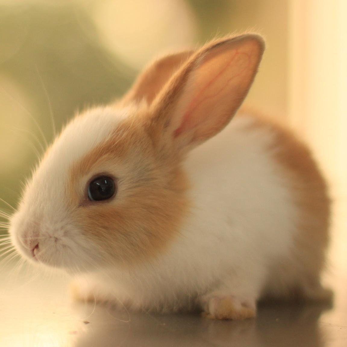 Cute Animal Pics (CuteAnimalsBaby) Twitter Cute