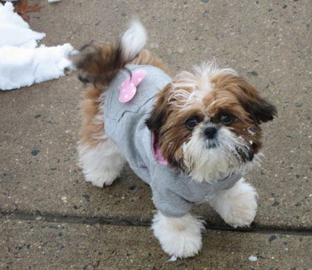 Like The Fact That This Jacket Covers The Top Of The Legs Shih