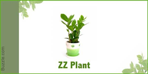 High Quality Dress Up Your Home With These Indoor Plants That Donu0027t Need Sunlight