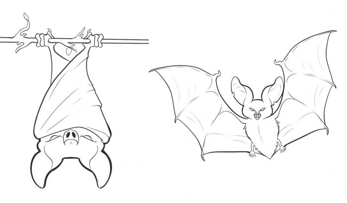 Free Printable Bat Coloring Pages For Kids Bat Coloring Pages