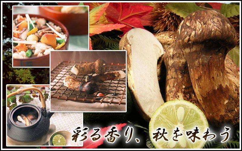 Matsutake | [Gift Park] Stock Теперь для гурманов