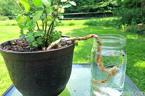 Vacation Proof Your Garden with These Easy DIY Methods #plantingdiysimple