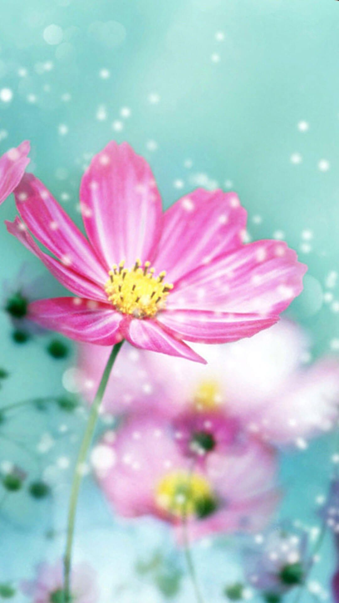 Spring Flower Iphone Hd Wallpaper
