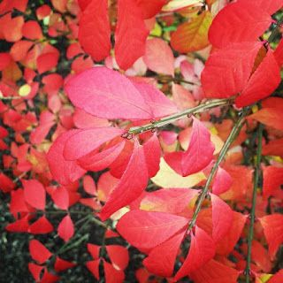 Le mois d'octobre est terminé... - Shandara.net