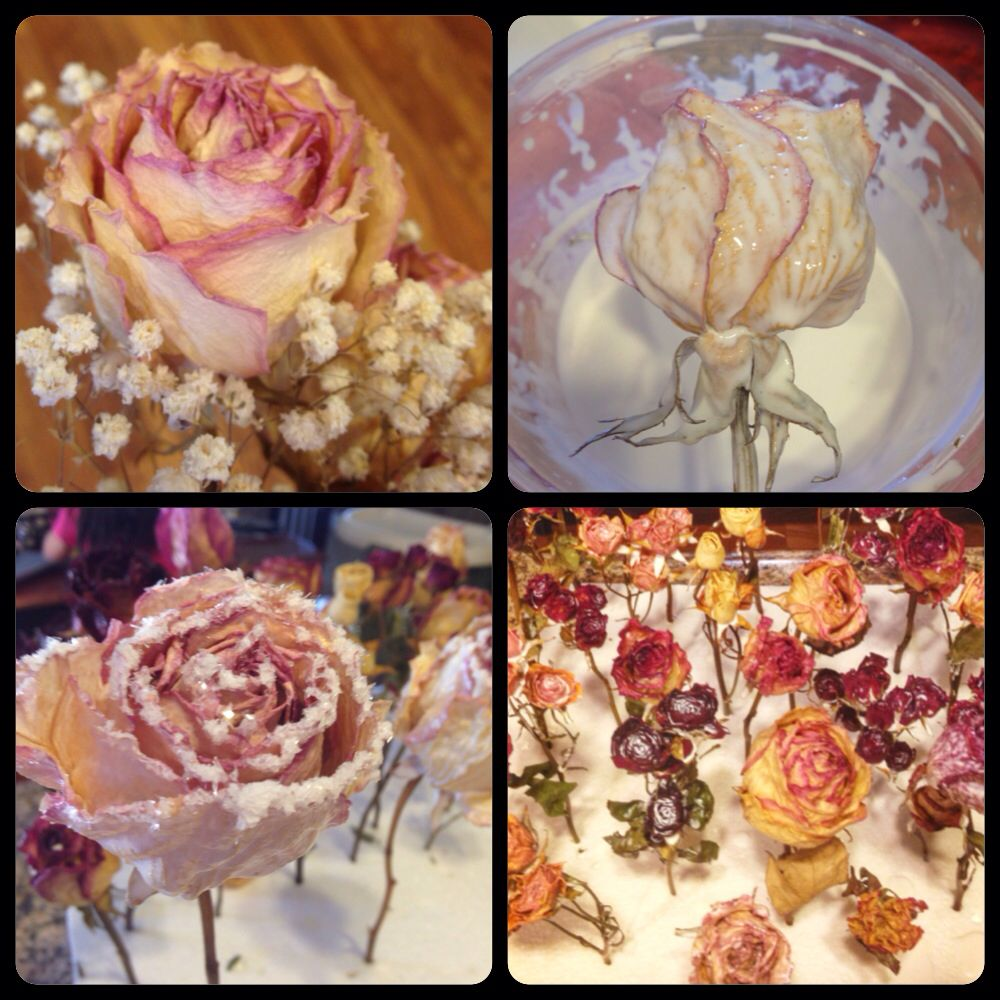 Want To Preserve Your Dried Roses Take Mod Podge Gloss And Add 3 Parts Mod Podge And One Part Water Dried Flowers Diy How To Preserve Flowers Mod Podge Crafts