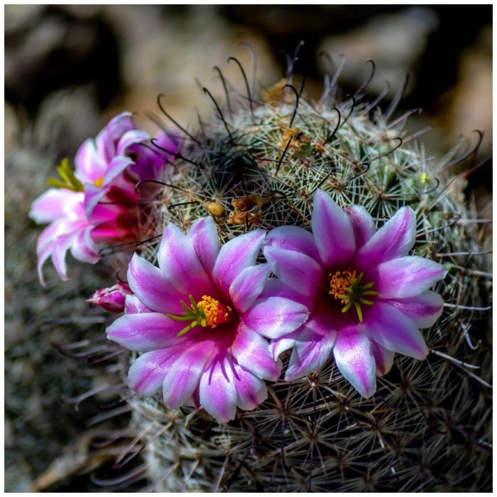 The 9 Best Botanical Gardens in Every State Desert