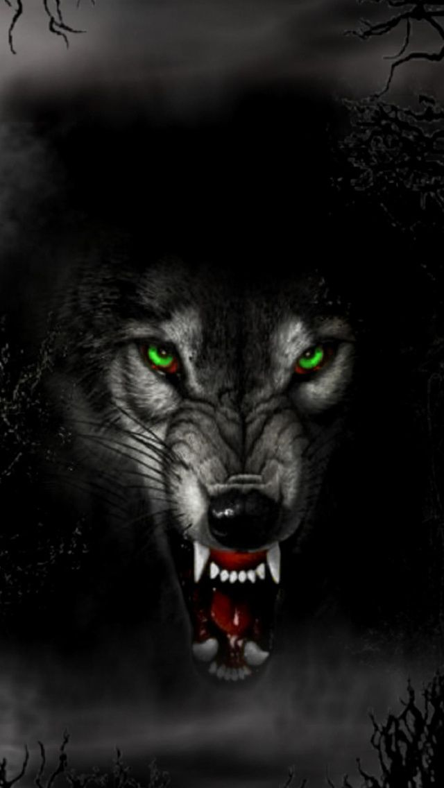 Pin By Zachary Kinsler On Wolf Wallpaper Angry Wolf Wolf