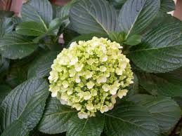 Resultado de imagem para flores para jardim