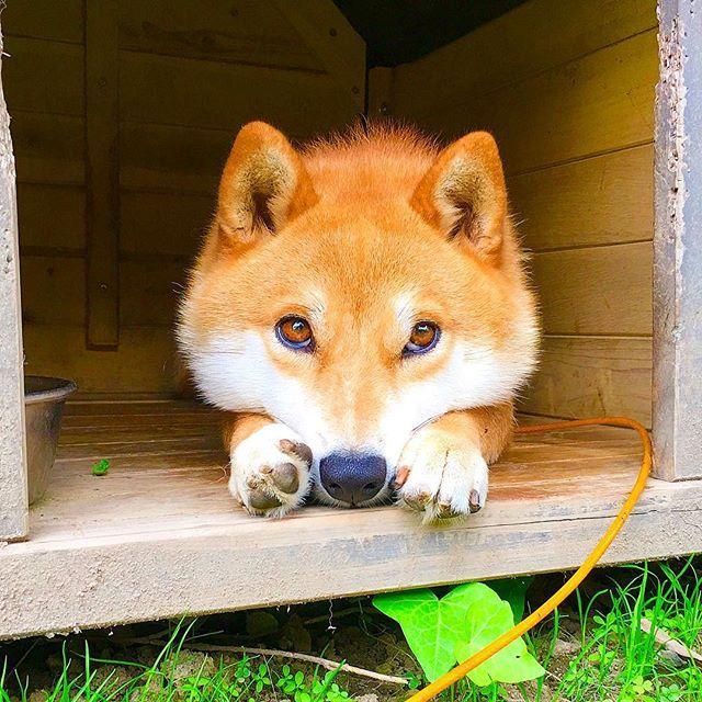 犬 の ツム