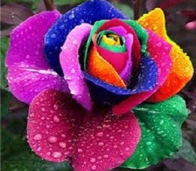 Flores Mas Hermosas Para Regalar Del Mundo Flores Exóticas Flores Inusuales Flores Increíbles