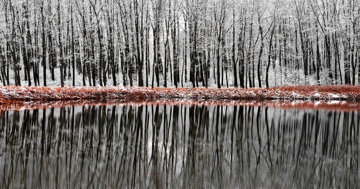 Forest Reflections © Philip Minnis