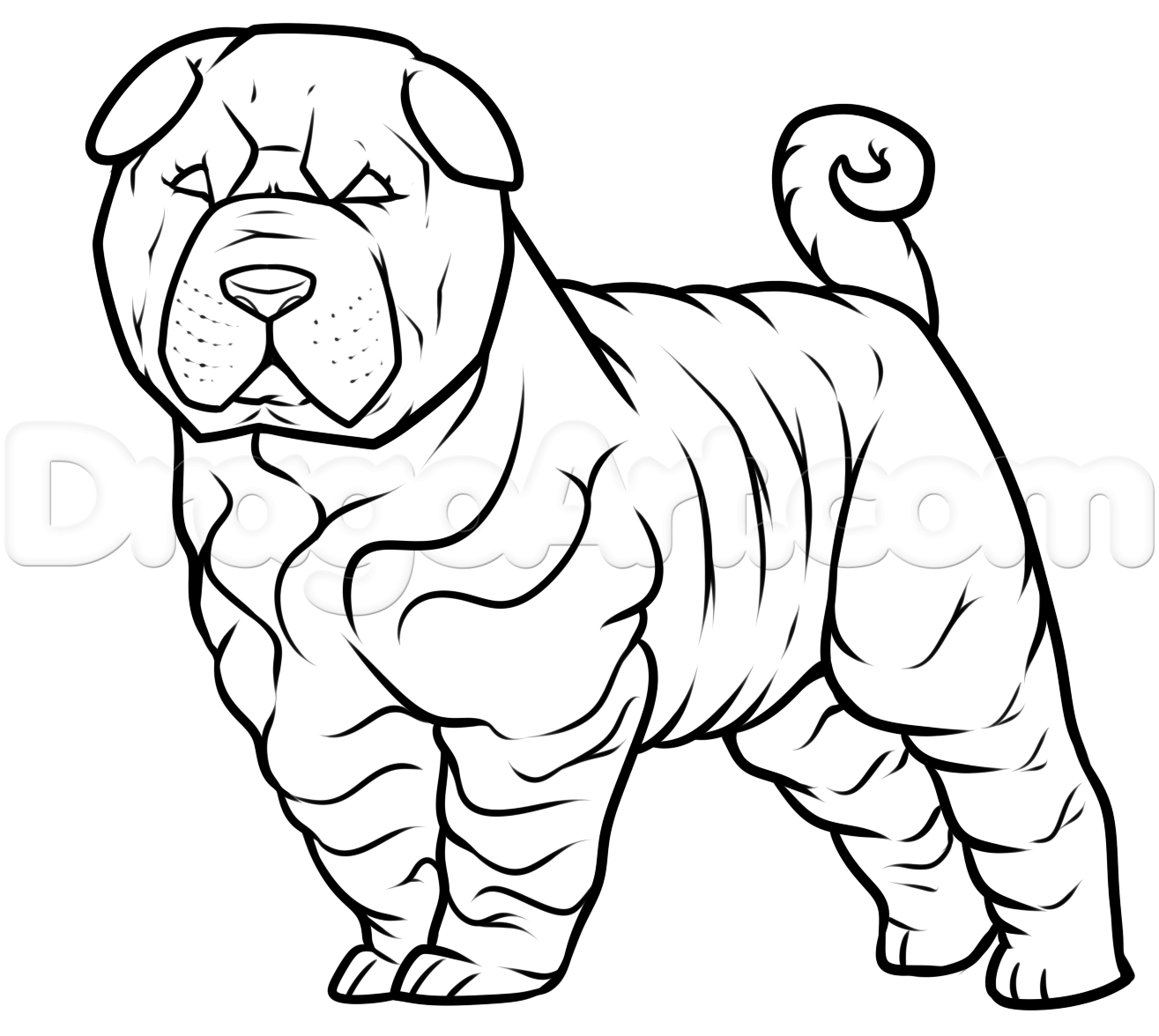 How to draw a shar pei step 7 in 2019 drawings chinese