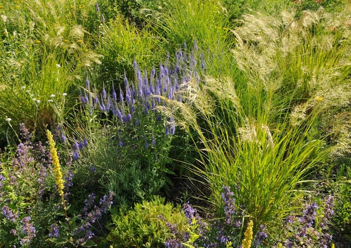 Kiesgarten - Gravel garden Garten ohne Rasen Pinterest - kies garten gelb