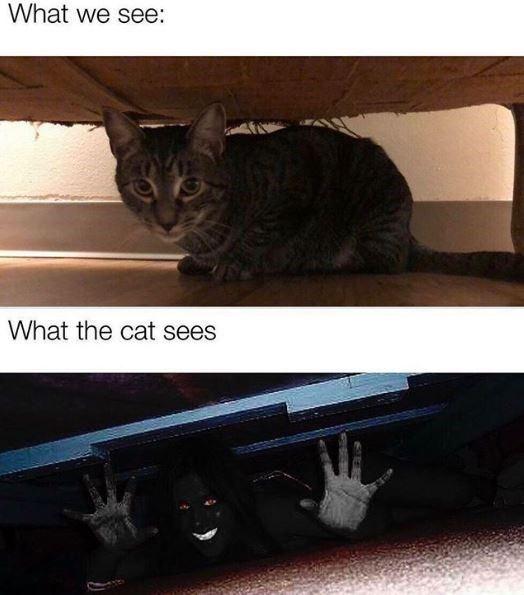 Oh Hey It S Caturday 33 Cat Memes In 2020 Funny Pictures Funny Relatable Memes Funny Memes