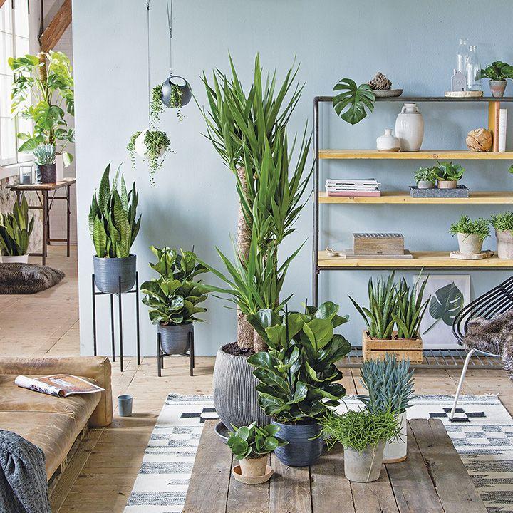 Vul die lege plek in je woonkamer op met een grote kamerplant, ook ...