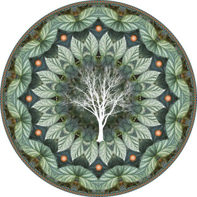 ⊰❁⊱ Mandala ⊰❁⊱ Árbol de Cigarras. mandala botánico Cicada Tree flower. botanical mandala