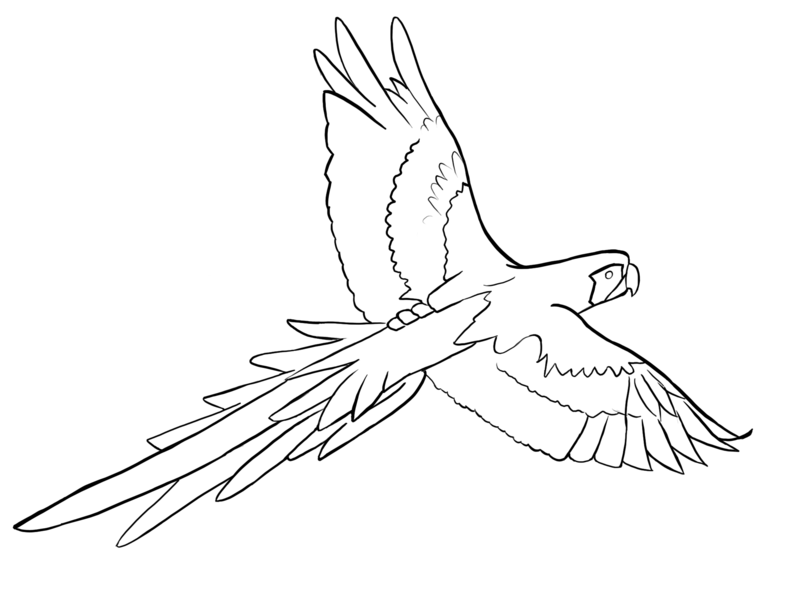 Parrots Coloring Sheet Outline, parrot drawing outline. Coloring ...