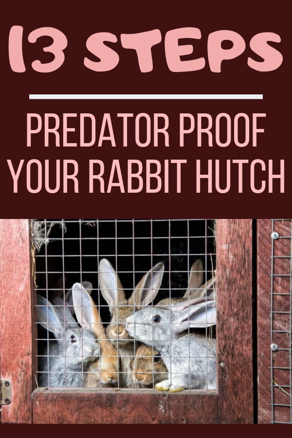 Photo of Steps To Predator Proof Your Rabbit Hutch