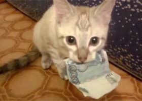 pisica care face bani)