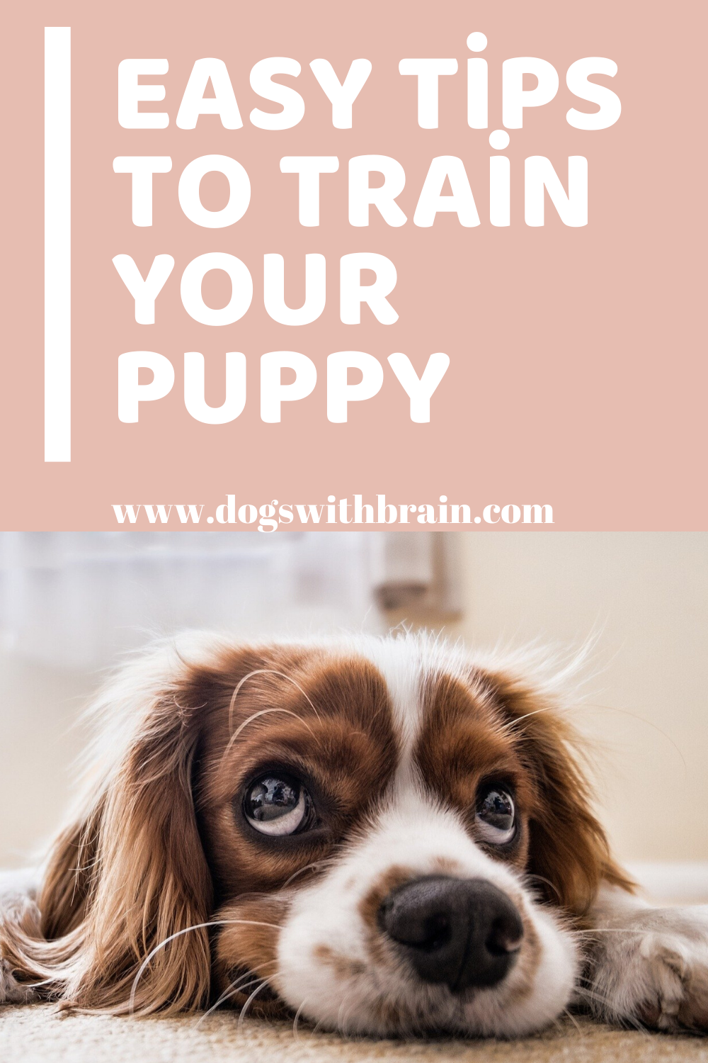 Click Here Get Your Training Dog Training Tips Dog Training Obedience In 2020 Labrador Puppy Training Potty Training Puppy Puppy Training Tips