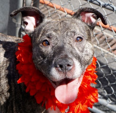Plunkie A1071944 Manhattan Please Share To Be Destroyed An Absolute Joy A Volunteer Writes I Am Still To Un Dog Friends Dog Adoption Animals