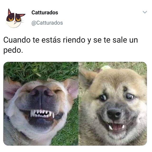 En Serio Me Estoy Riendo Memes De Perros Chistosos Memes Perros Humor Divertido Sobre Animales