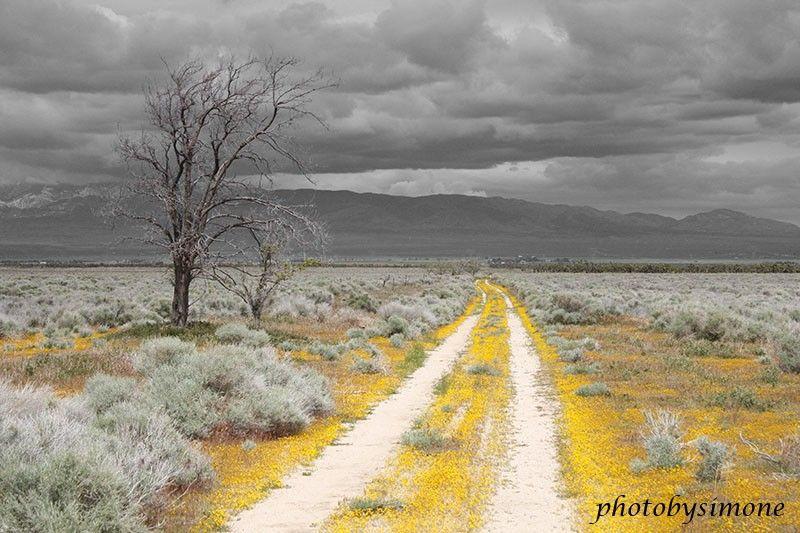 Yellow Road Yellow Flowers Gray Sky Fine Art Photography Yellow Road Grey Skies Art Photography