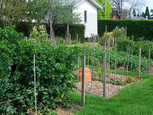 Double Dig a Garden | Organic vegetable garden, Organic ...
