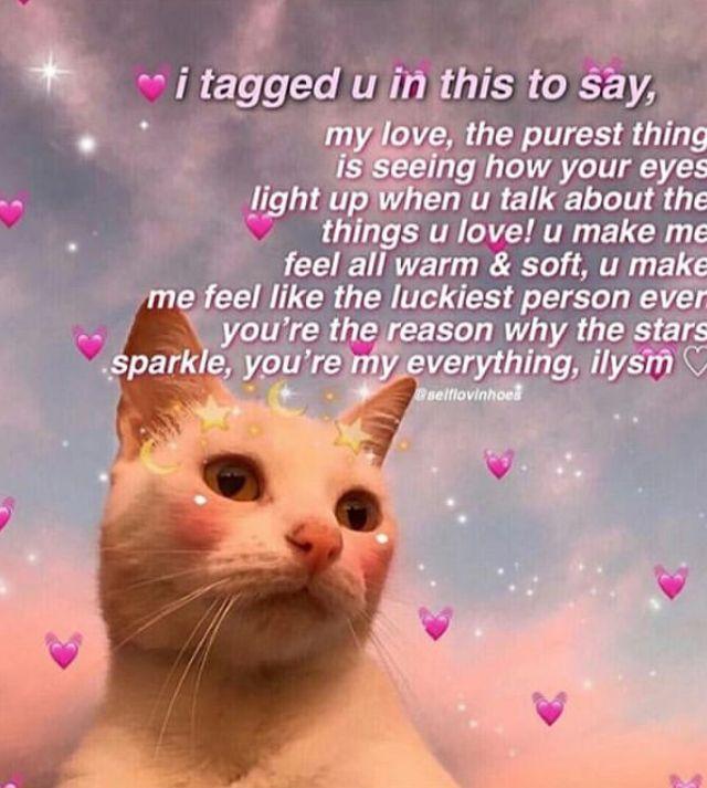 Pin By Debillah On C Felidae Cute Love Memes Cute Memes Love Memes