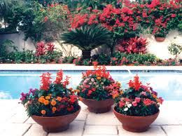 Image result for florida pool pots landscaping ideas