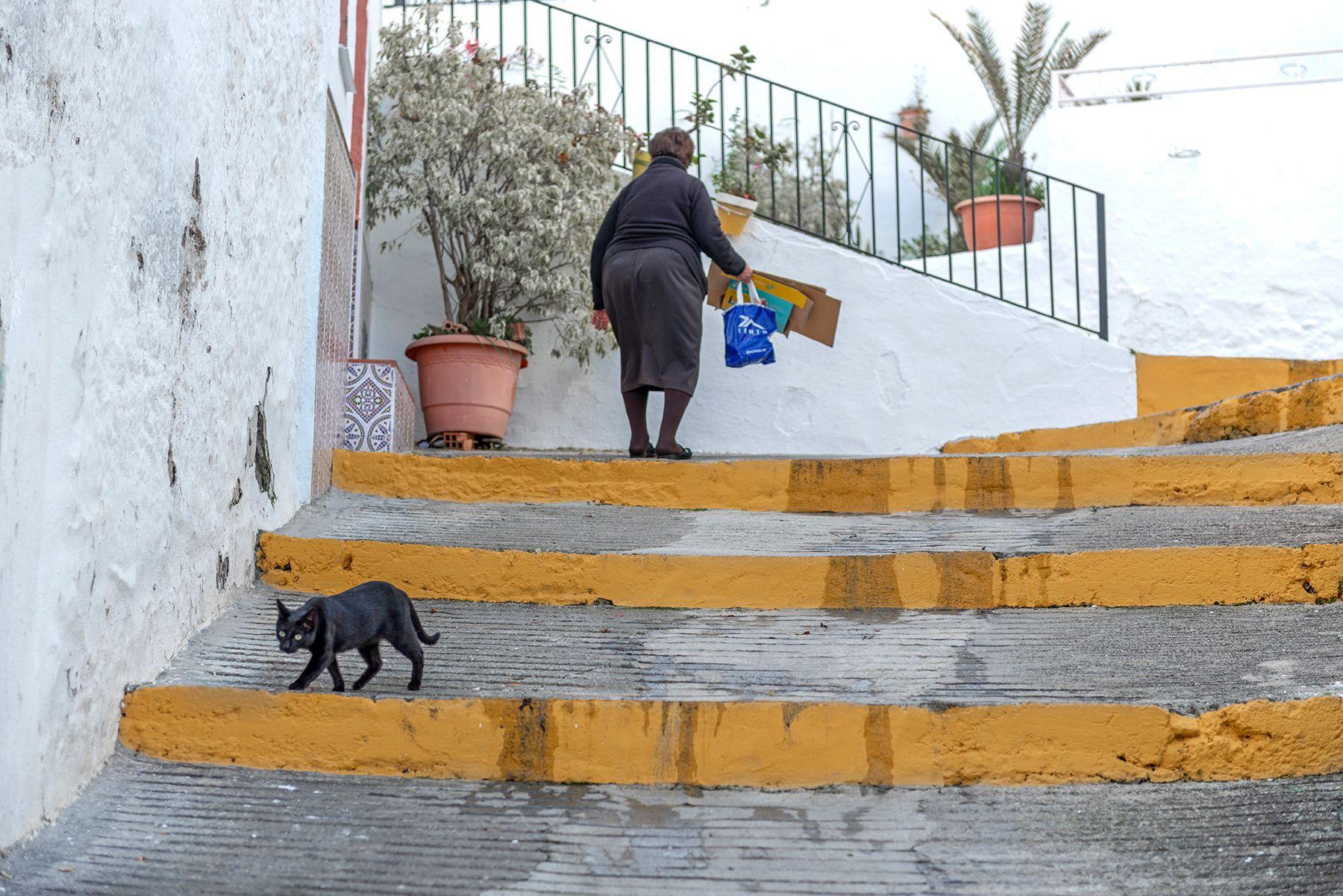 Gato negro con ojos claros