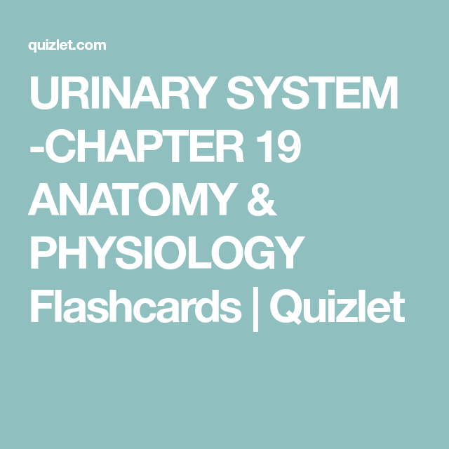 URINARY SYSTEM -CHAPTER 19 ANATOMY & PHYSIOLOGY Flashcards | Quizlet ...