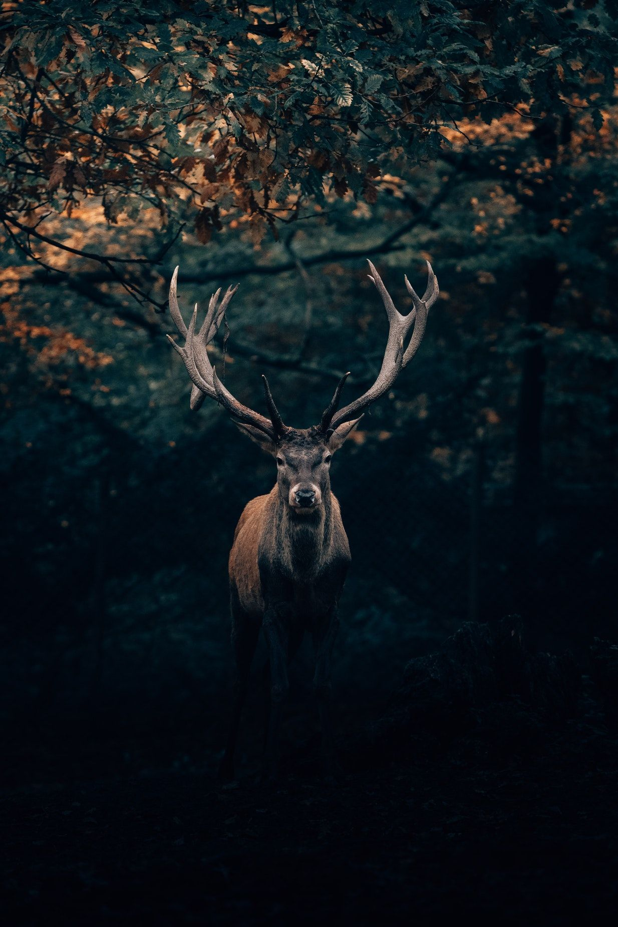 15 Soothing Photographs Of Magnificent Deer And Moose Deer Pictures Deer Wallpaper Animals Images