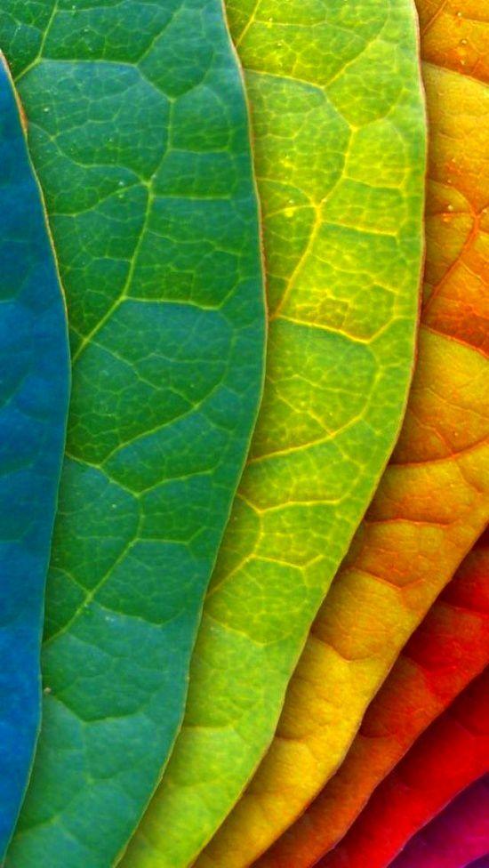 Abstract Fall Colors Wallpaper Rainbow Arc En Ciel Arcobaleno レインボー Regenbogen