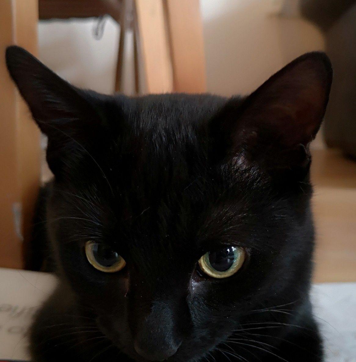 Green eyed black cat Cats, Animals, Beautiful