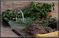 Herb Lore - Herbs & Flowers used in spells, Charms and Rituals