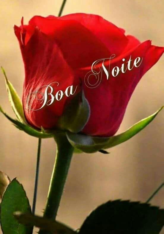 Boa Noite Com Imagens Belas Rosas Vermelhas