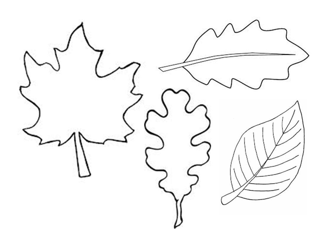 Leaves Outlines