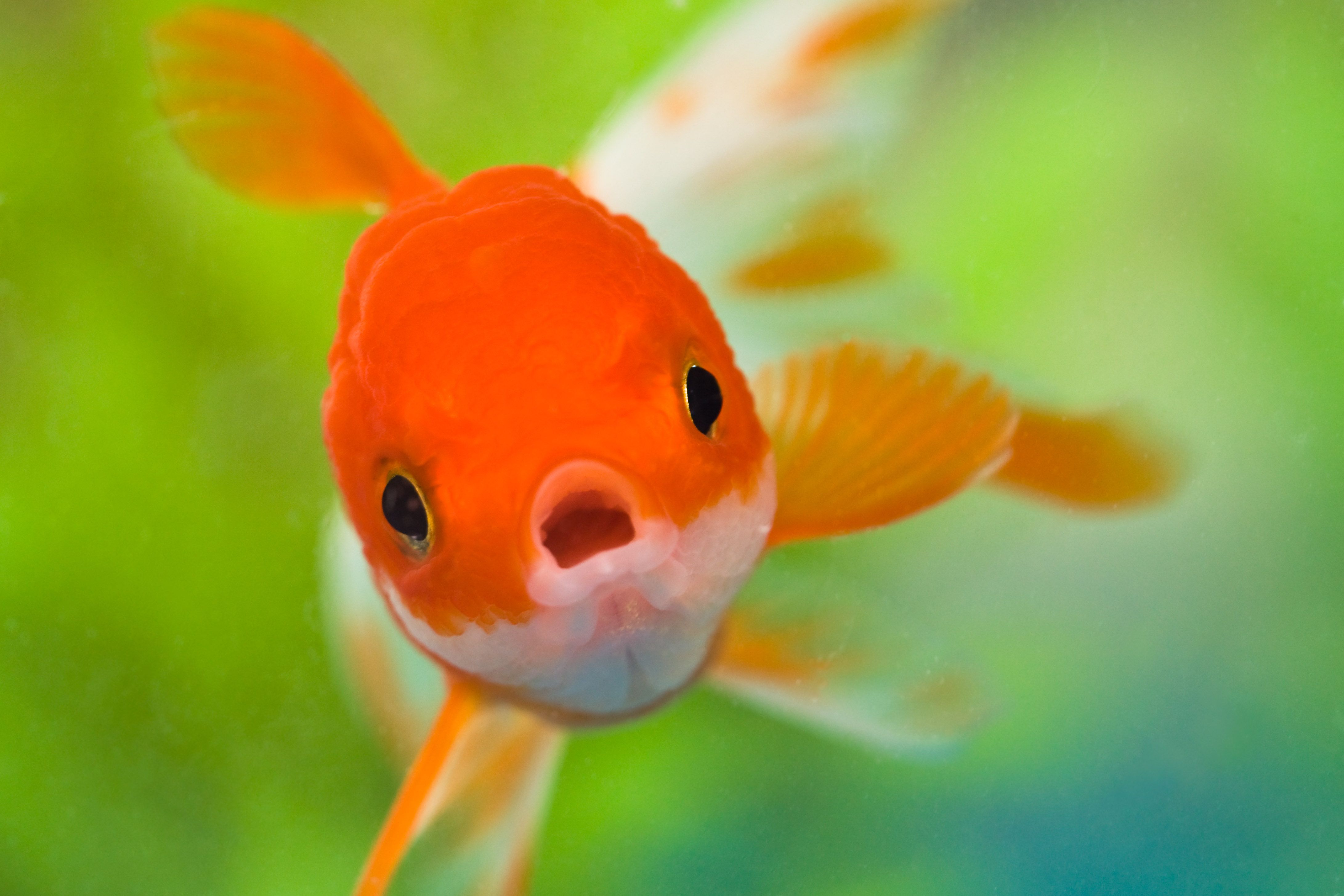 Tips for photographing fish in an aquarium