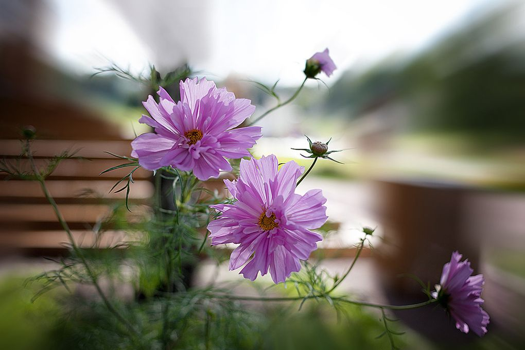 flower so beautiful.. can't stop loving it !